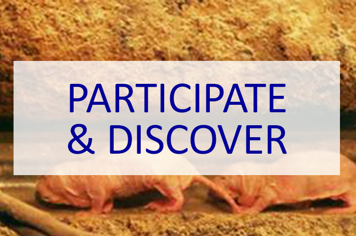 participate-and-discover-711x473